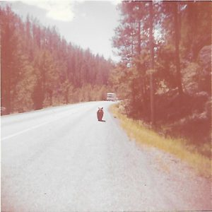 Black bear roams Yellowstone-July 1963